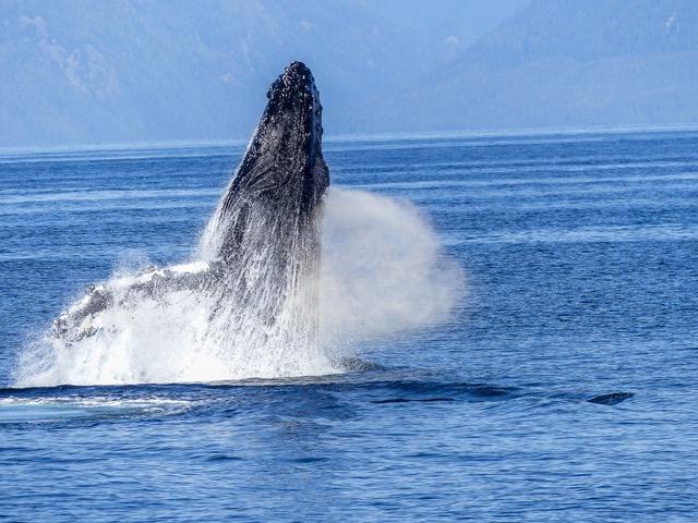 Des baleines vues à Gênes 2020